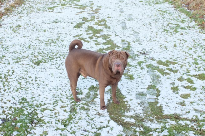 ollie-snow-close-up