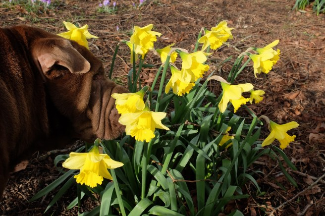 ollie-and-daffs